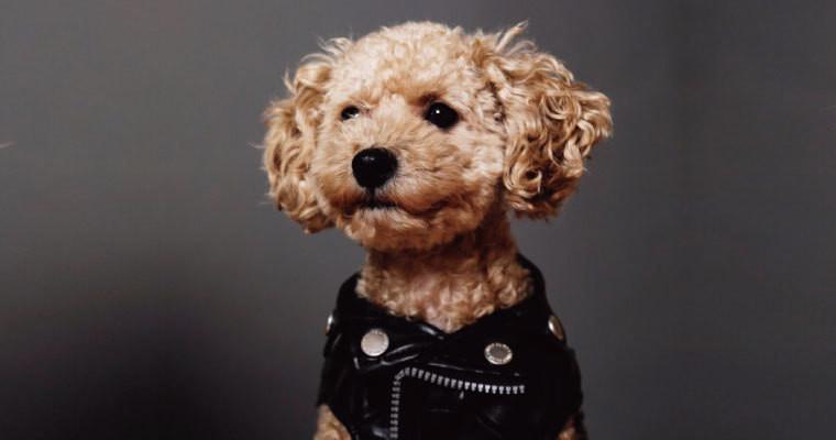 ペット用品メーカーのマーケティング責任者の知り合いはいませんか?